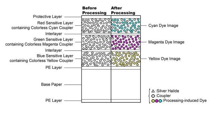 Structure du papier Fuji Crystal Archive DP II - Documentation fabricant